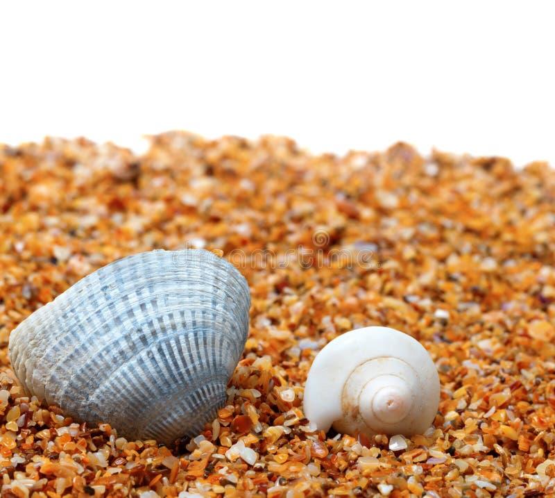Concha do mar dois na areia e no fundo branco imagem de stock royalty free