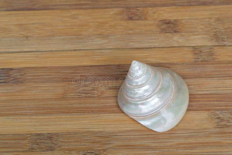 Concha do mar em um fundo de madeira imagem de stock royalty free