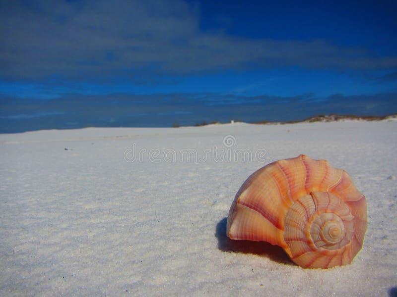 Concha do mar em um Sandy Beach branco fotos de stock royalty free