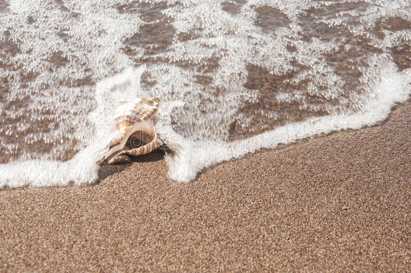 Concha do mar grande na areia fotos de stock royalty free