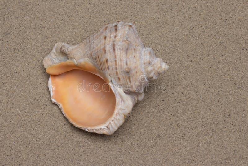 Concha do mar na areia imagem de stock