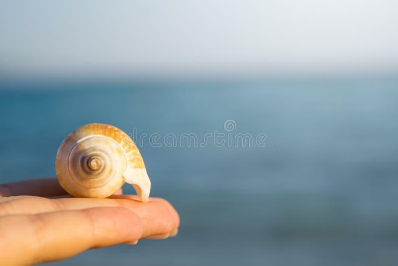 Concha do mar na palma de sua mão Mar azul borrado no fundo foto de stock royalty free