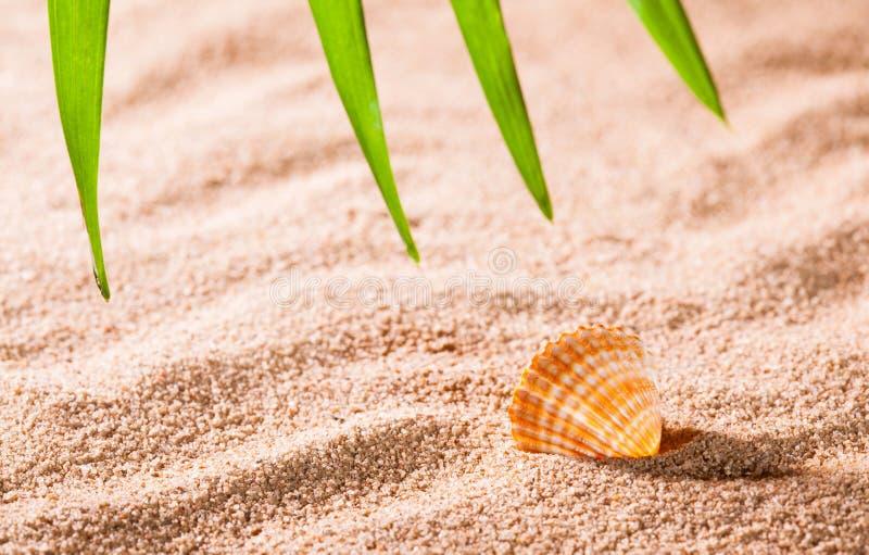 Concha do mar na praia ensolarada imagens de stock royalty free