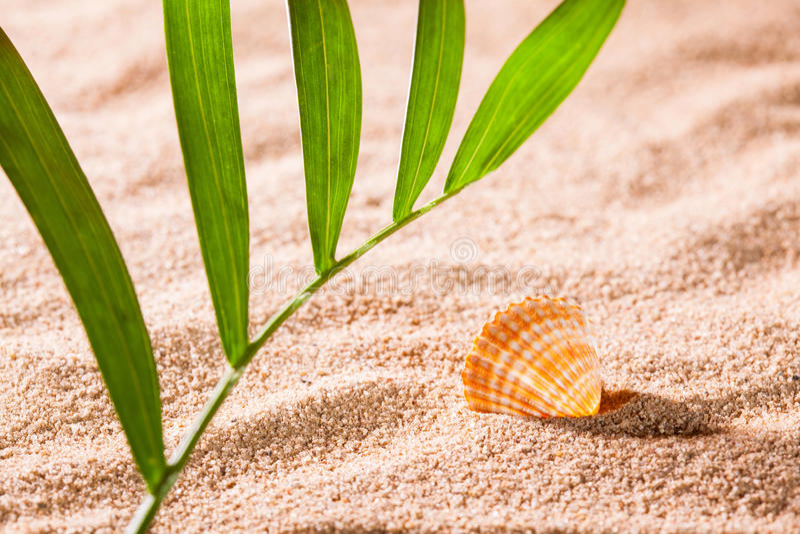Concha do mar na praia ensolarada imagens de stock