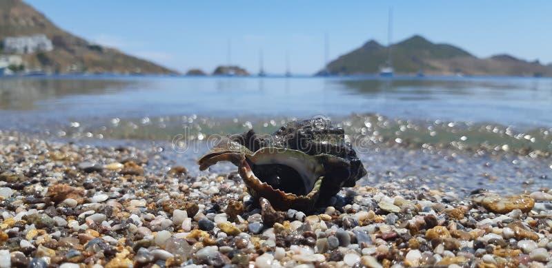 Concha do mar na praia foto de stock