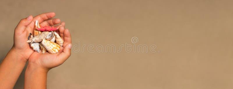 Concha do mar nas mãos de uma criança Fundo do verão com a areia foto de stock
