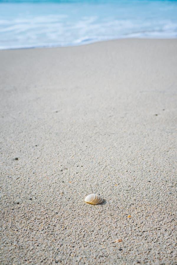 Concha do mar no Sandy Beach com espuma branca de ondas de oceano do rolamento no fundo Praia tropical com água azul dos azuis ce imagem de stock