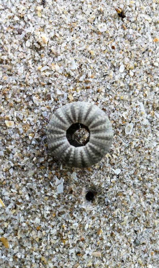 Concha marina foto de archivo