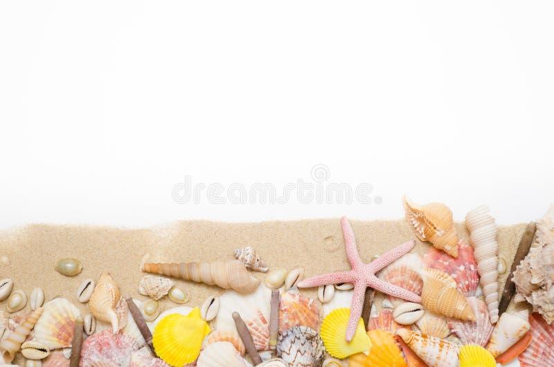 Concha marina de las estrellas de mar de la arena en el fondo blanco foto de archivo