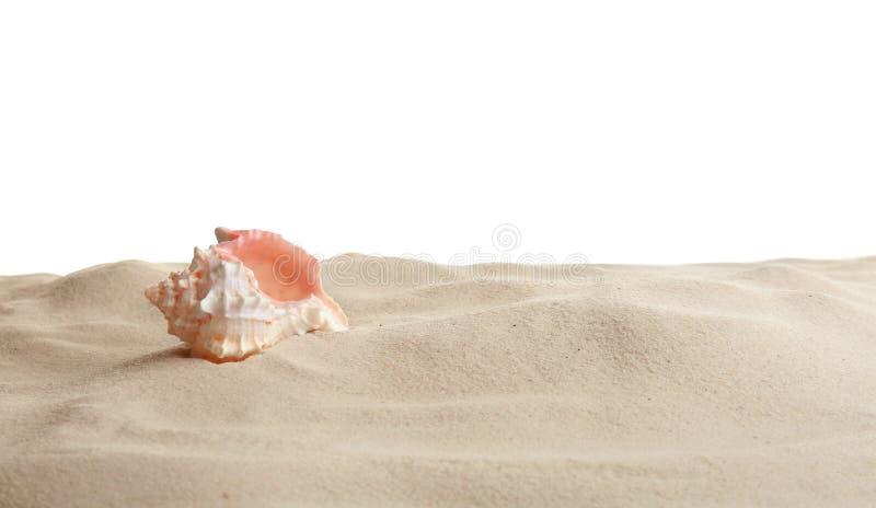 Concha marina en arena de la playa contra el fondo blanco fotografía de archivo libre de regalías