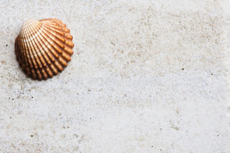 Concha marina en superficie pedregosa de la teja fotografía de archivo libre de regalías