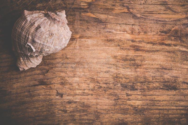 Concha marina en vieja superficie de madera fotos de archivo libres de regalías