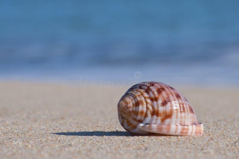 Concha marina sobre la arena y el agua borrosa fotografía de archivo libre de regalías
