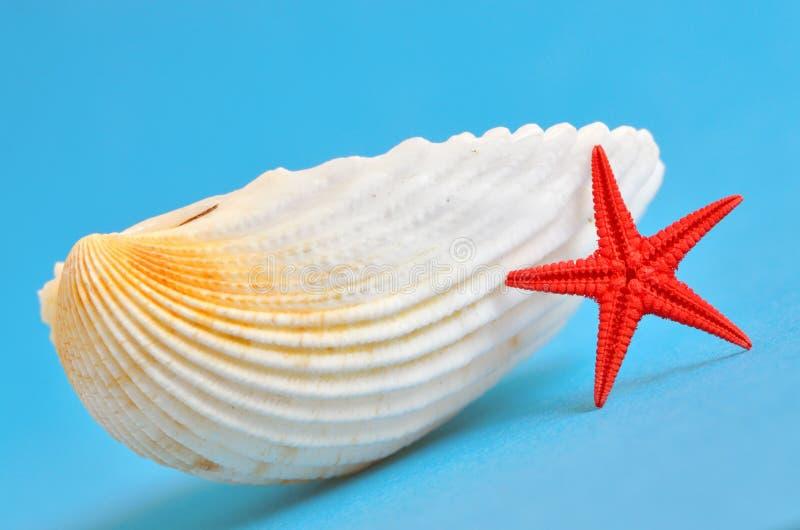 Concha marina y estrellas de mar fotos de archivo