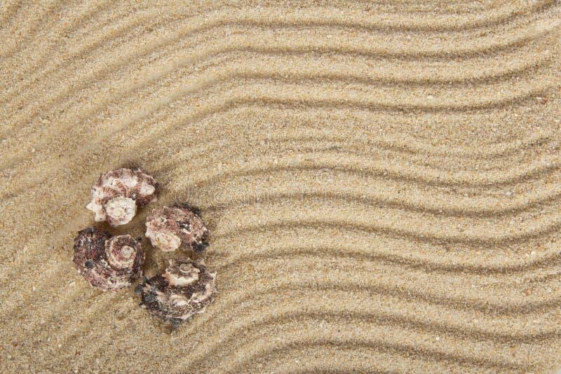 Download Conchas De Berberecho Del Mar En La Arena Foto de archivo - Imagen de crustáceos, anaranjado: 41921282