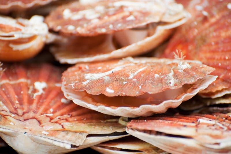 Conchas de peregrino francesas especiales del alimento fotografía de archivo