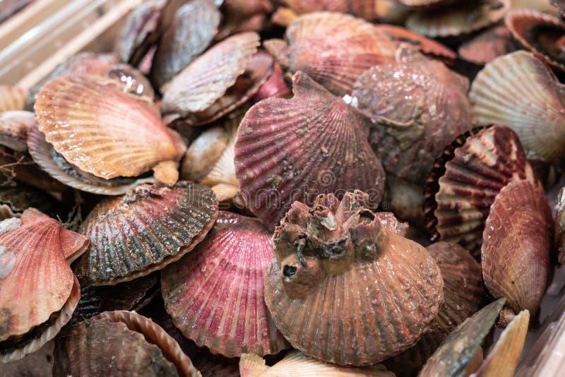 Conchas de peregrino frescas en venta en el mercado Maximus de Pecten imagen de archivo libre de regalías