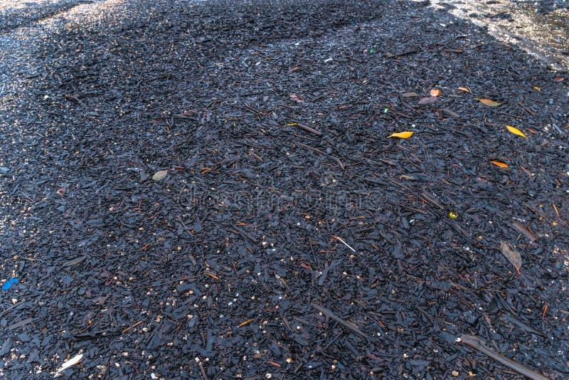 Conchas dispersas numa praia preta a praia de areia preta fica em Trat Tailândia imagem de stock royalty free