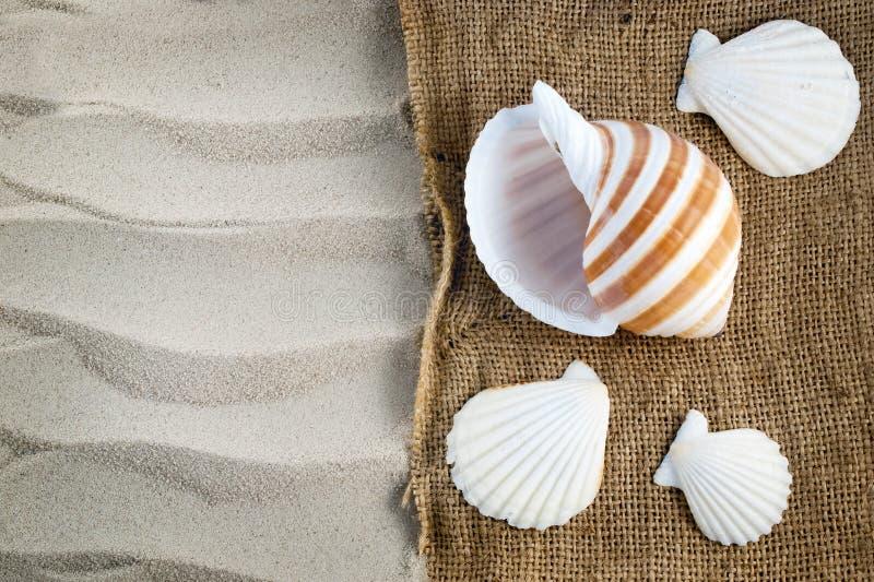 Conchas do mar. fotografia de stock royalty free