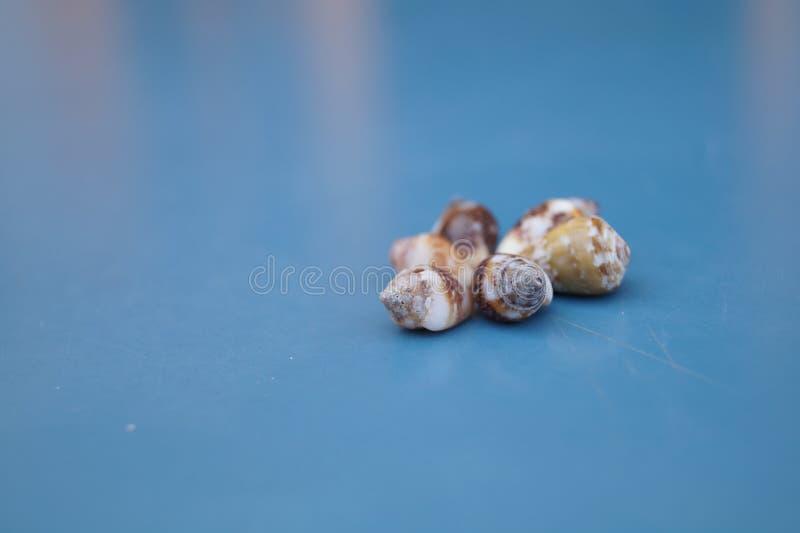 Conchas do mar 6 fotografia de stock