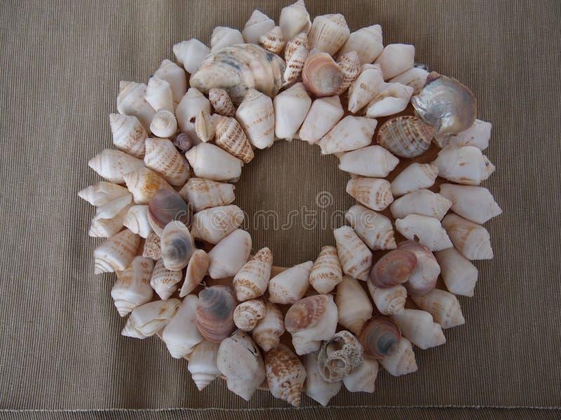 Conchas do mar alinhadas em um círculo fotografia de stock