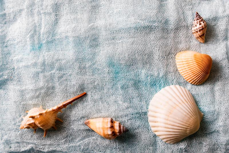 Conchas do mar arranjadas no fundo branco de pano imagens de stock royalty free