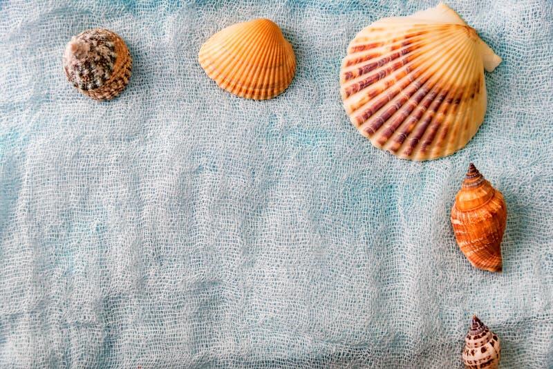 Conchas do mar arranjadas no fundo branco de pano fotografia de stock