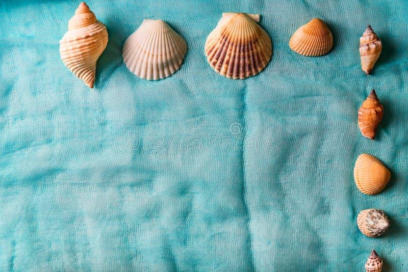 Conchas do mar arranjadas no fundo cian de pano imagem de stock