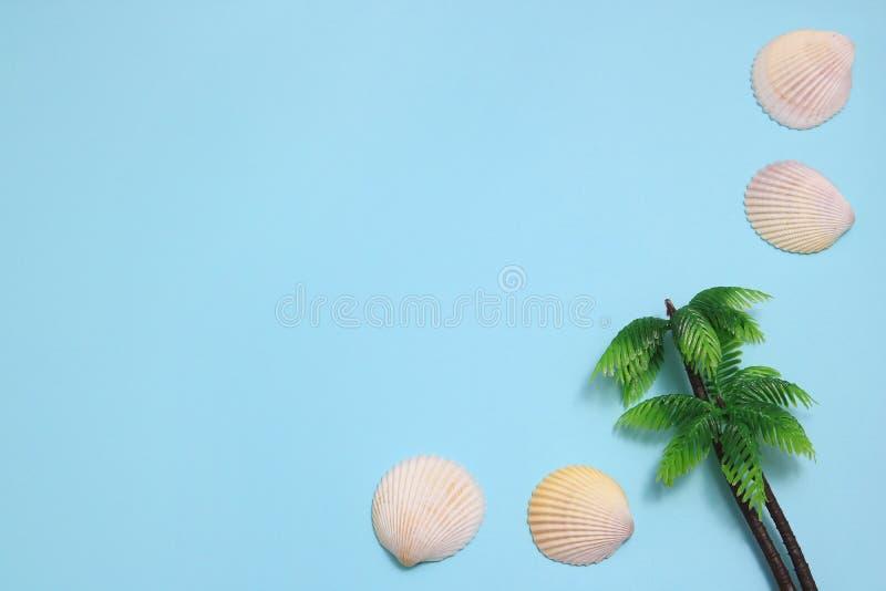 Conchas do mar brancas no fundo azul foto de stock
