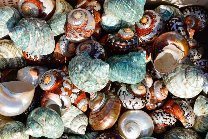 Conchas do mar coloridas fotografia de stock royalty free