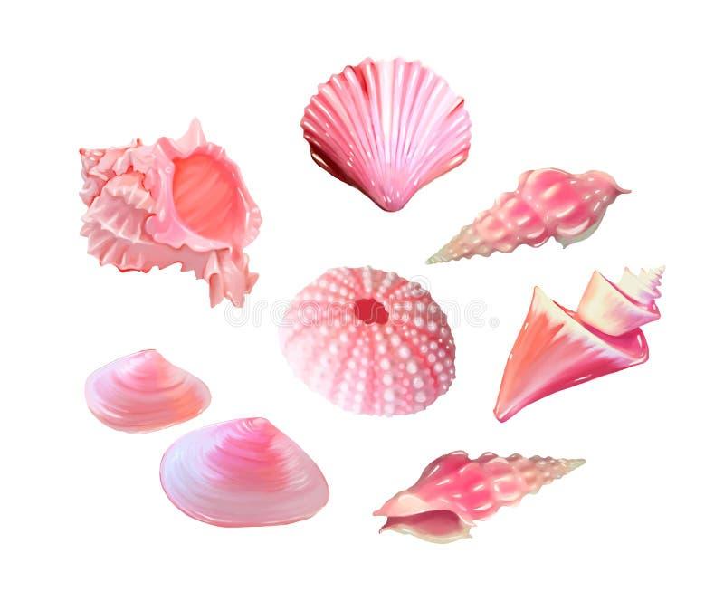 Conchas do mar cor-de-rosa Ilustração do vetor Sob o mar Vida roxa subaquática diabrete cor-de-rosa molusco - O arquivo do vetor ilustração royalty free