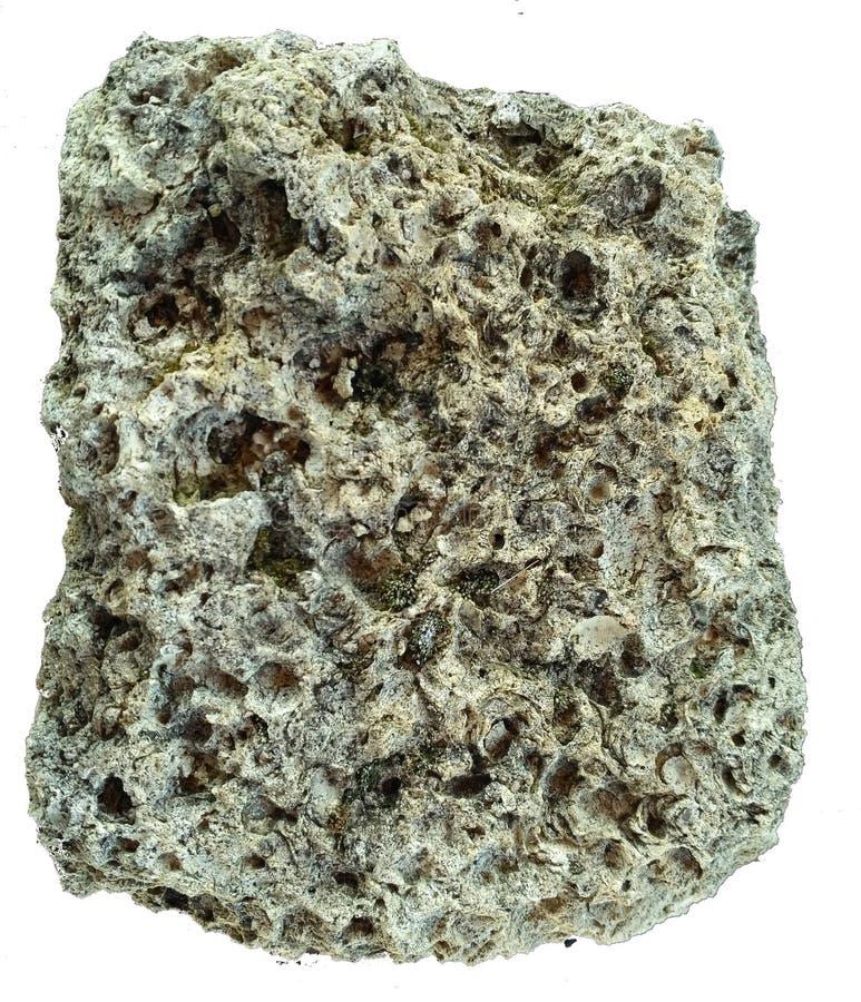 Conchas do mar da rocha isoladas no branco imagem de stock royalty free