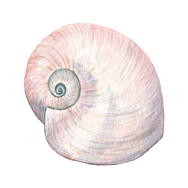Conchas do mar delicadas da aquarela ilustração stock