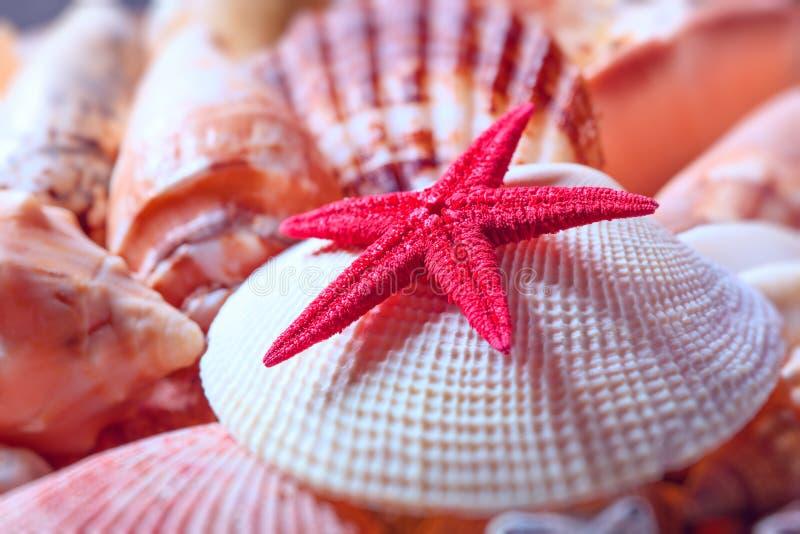 Conchas do mar e estrela do mar foto de stock royalty free