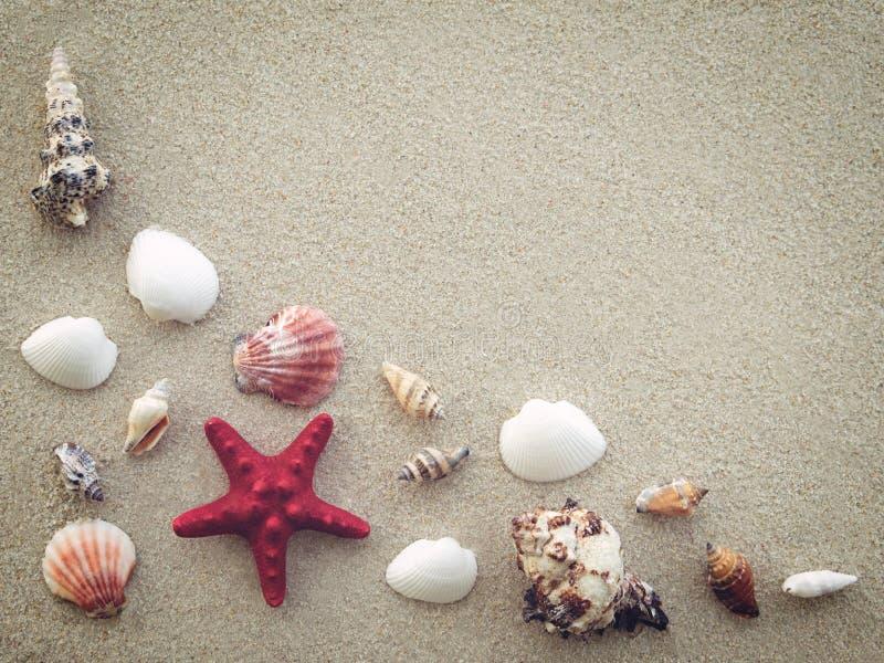 Conchas do mar e estrela do mar na praia da areia imagem de stock royalty free