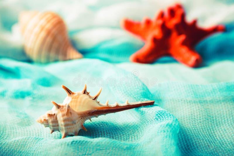 Conchas do mar e estrela do mar no fim cian do fundo acima fotografia de stock