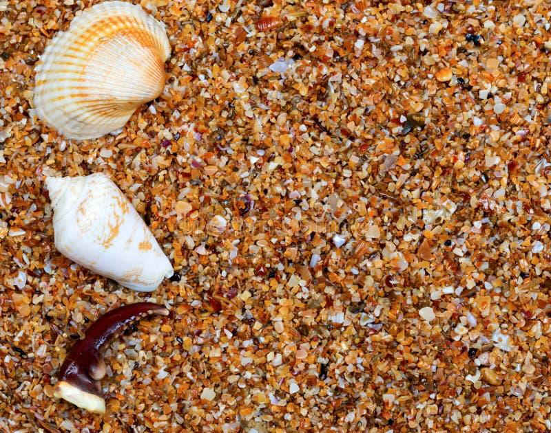 Conchas do mar e garra do caranguejo na areia fotografia de stock