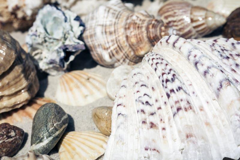 Conchas do mar e pedras na areia, conceito do curso do fundo da praia do ver?o com espa?o da c?pia para o texto fotografia de stock royalty free