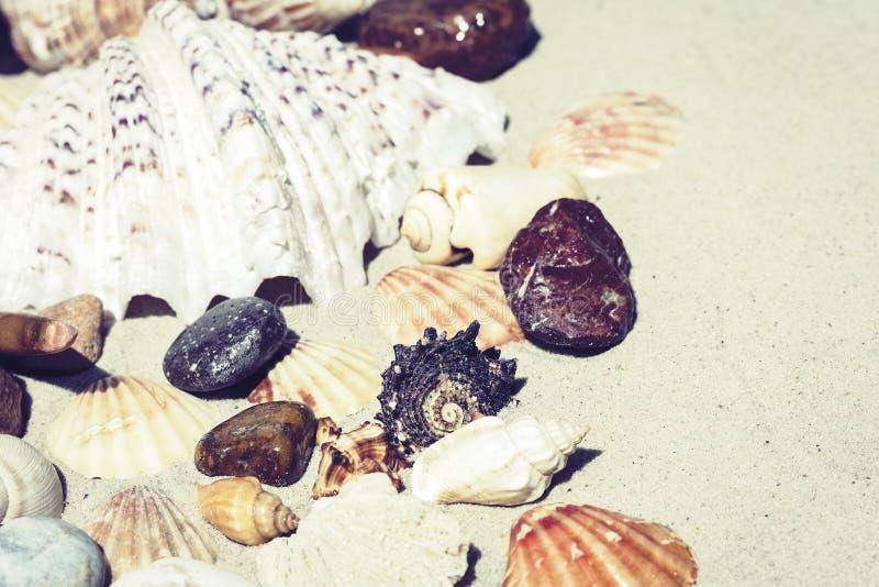 Conchas do mar e pedras na areia, conceito do curso do fundo da praia do ver?o com espa?o da c?pia para o texto fotografia de stock