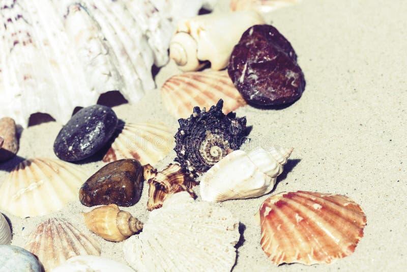 Conchas do mar e pedras na areia, conceito do curso do fundo da praia do ver?o com espa?o da c?pia para o texto fotos de stock royalty free