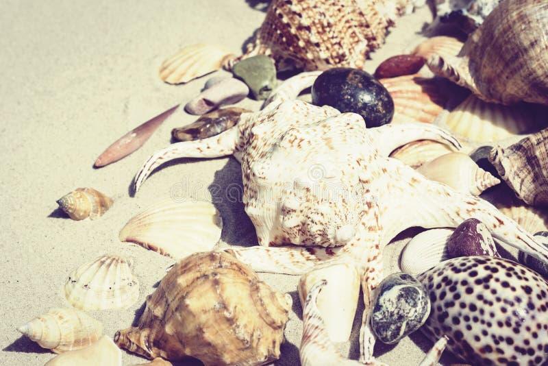 Conchas do mar e pedras na areia, conceito do curso do fundo da praia do ver?o com espa?o da c?pia para o texto imagens de stock royalty free