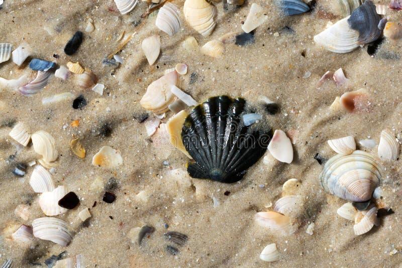 Conchas do mar e praia molhadas da areia no verão foto de stock