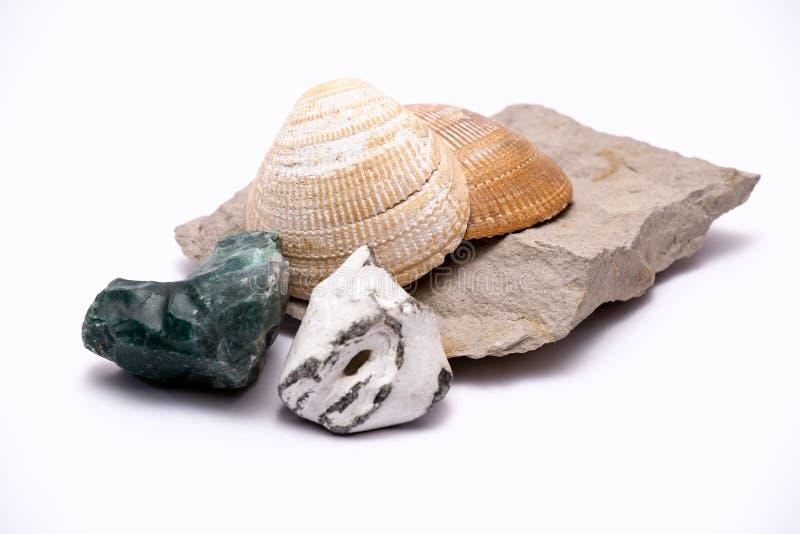 Conchas do mar e rochas imagem de stock
