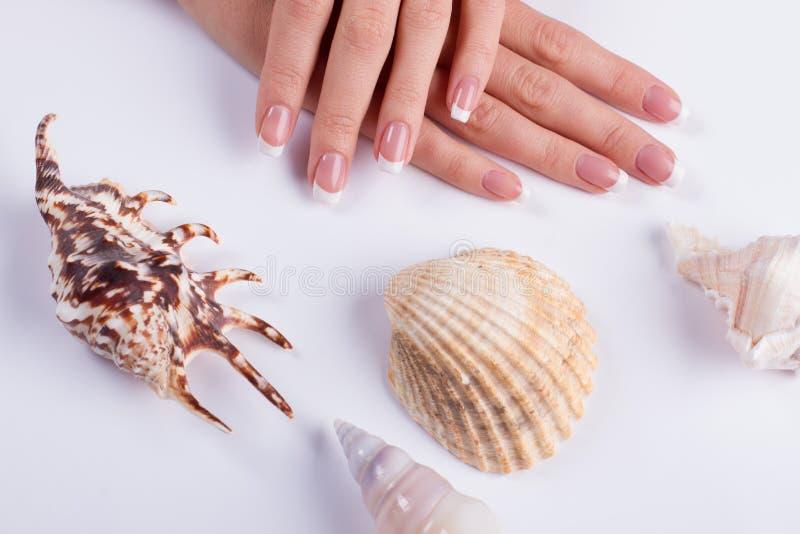 Conchas do mar e tratamento de mãos bonitos imagens de stock royalty free