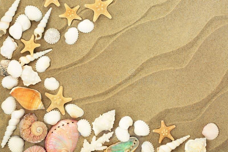 Conchas do mar em Sandy Beach imagens de stock