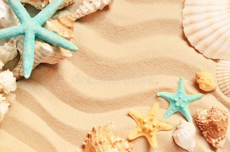 Conchas do mar em uma praia e em uma areia do verão como o fundo Escudos do mar imagens de stock royalty free