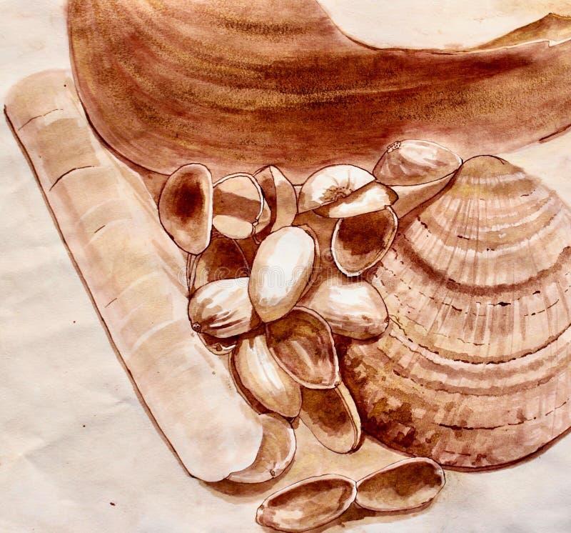 Conchas do mar, escudo da lâmina, escudo dos moluscos e escudos da porca de pistache ilustração royalty free