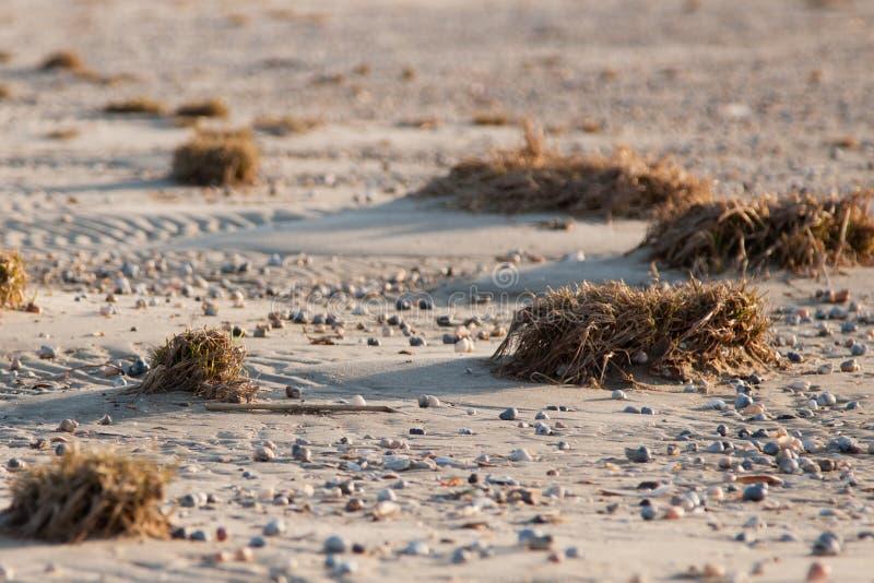 Conchas do mar na areia fotos de stock