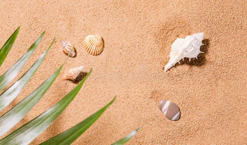 Conchas do mar na praia ensolarada fotos de stock