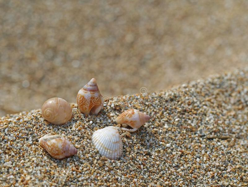 Conchas do mar pequenas no fundo da areia - macro disparadas de conchas do mar bonitas imagens de stock royalty free